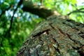 Картинка зелень, природа, дерево, кора