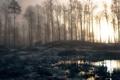 Картинка лес, вода, рассвет, болото