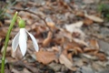 Картинка forest, flower, butterfly, snowdrop