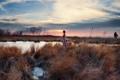 Картинка поле, девушка, закат