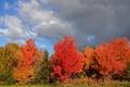 Картинка лес, осень, небо, деревья, тучи