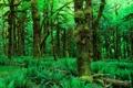 Картинка зелень, лес, листья, деревья, природа, фото, обои