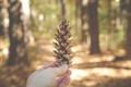 Картинка лес, nature, шишка, hand, pine cone, outdoors, woods