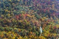 Картинка дорога, осень, лес, деревья, США, вид сверху, North Carolina