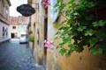 Картинка цветок, листья, город, улица, растение, дома