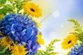 Картинка цветы, фото, гортензия