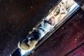 Картинка кот, фон, кошак, котяра, лапка, щель