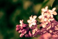 Картинка макро, цветы, природа, цвет, ветка, весна, сирень