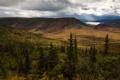 Картинка пейзаж, горы, природа, парк, фото, ель, США