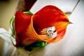Картинка цветок, оранжевый, яркий, камни, золото, бриллиант, драгоценности