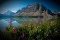 Картинка цветы, Канада, Альберта, Banff National Park, Alberta, Canada, Банф