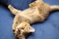Картинка кошка, взгляд, лапы, тянется