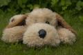 Картинка трава, игрушка, собака