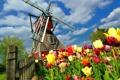 Картинка весна, клумба, облака, забор, тюльпаны, мельница, деревья
