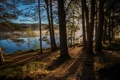 Картинка лес, деревья, река, Англия, Шотландия, Scotland, England