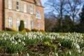 Картинка цветы, замок, поляна, весна