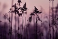 Картинка фиолетовый, небо, трава, закат