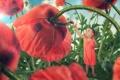Картинка цветы, маки, девочка, огромные