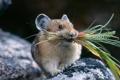 Картинка природа, ситуация, трава, мышонок, Мышь