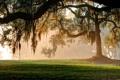 Картинка парк, дерево, мох, утро, солнечный цвет
