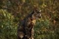 Картинка кошка, природа, сидит