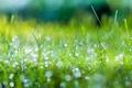 Картинка лето, трава, капли, макро, зеленый, роса, блеск