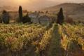 Картинка солнце, лучи, дом, холмы, поля, виноградник, заходящее