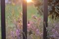 Картинка зелень, солнце, макро, лучи, свет, цветы, природа
