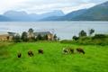 Картинка животные, горы, природа, фото, берег, дома, коровы