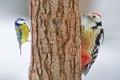 Картинка цвета, птицы, дерево, перья, ствол, кора