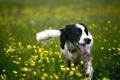 Картинка друг, собака, природа, лето