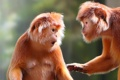 Картинка удивление, обезьянки, боке