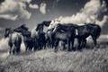 Картинка поле, небо, облака, ветер, лошади, холм, вершина