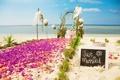 Картинка море, цветы, природа, тропики, побережье, беседка, лепестковая дорожка
