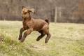 Картинка прыжок, загон, трава, козленок