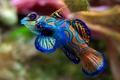 Картинка цвета, аквариум, Рыба