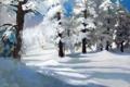 Картинка лес, деревья, зима, арт, снег, сугробы
