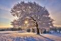 Картинка зима, солнце, снег, природа, иний, дерево