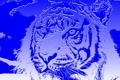 Картинка кошка, абстракция, тигр
