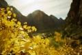Картинка осень, листья, макро, природа, фото, пейзажи, растения