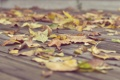 Картинка листья, сухие, осень, асфальт