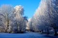 Картинка зима, небо, иний, деревья, природа