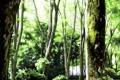 Картинка лес, деревья, природа, листва, мох, арт, живопись