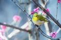 Картинка цветы, птица, ветка, перья, клюв