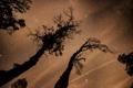 Картинка космос, звезды, деревья, пространство