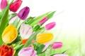 Картинка цветы, букет, colorful, тюльпаны, tulips