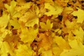 Картинка осень, листва, жёлтая