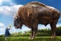 Картинка небо, трава, природа, девочка, цветочки, бизон