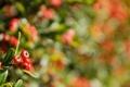 Картинка макро, блики, ягоды, фон, листва, ветка, розмытость