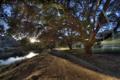 Картинка дорога, лучи, свет, деревья, пейзаж, природа, HDR